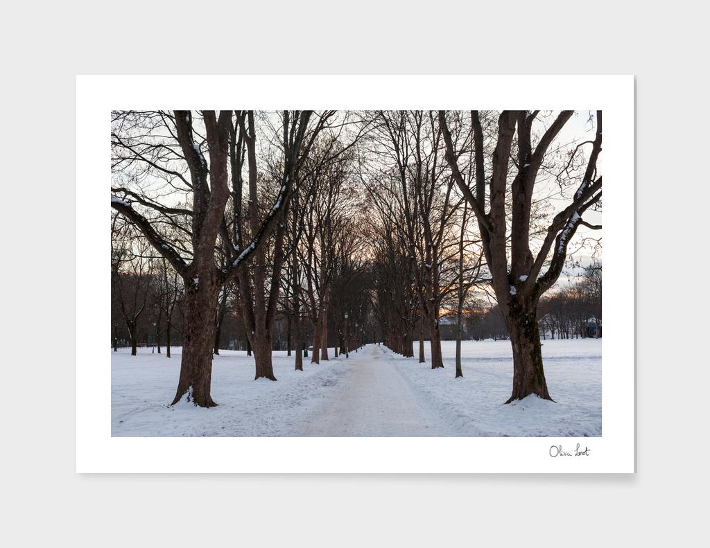 Snowy allée