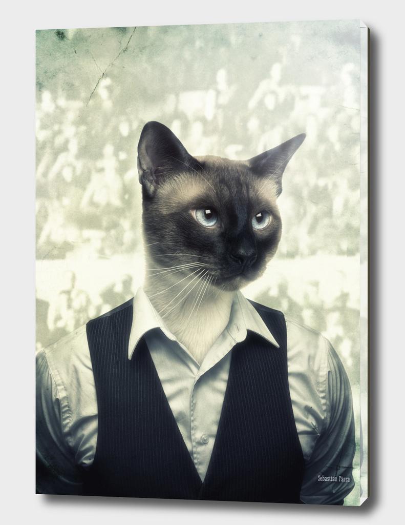 Fancy Cat