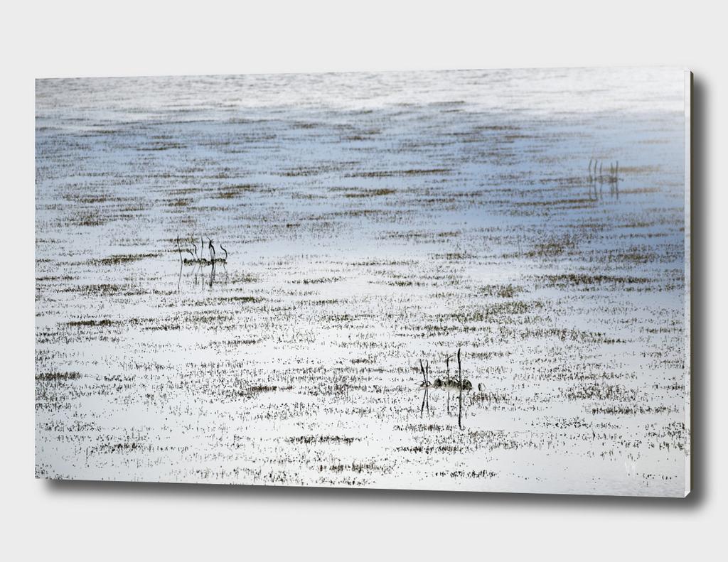 Light,Texture & Aqua