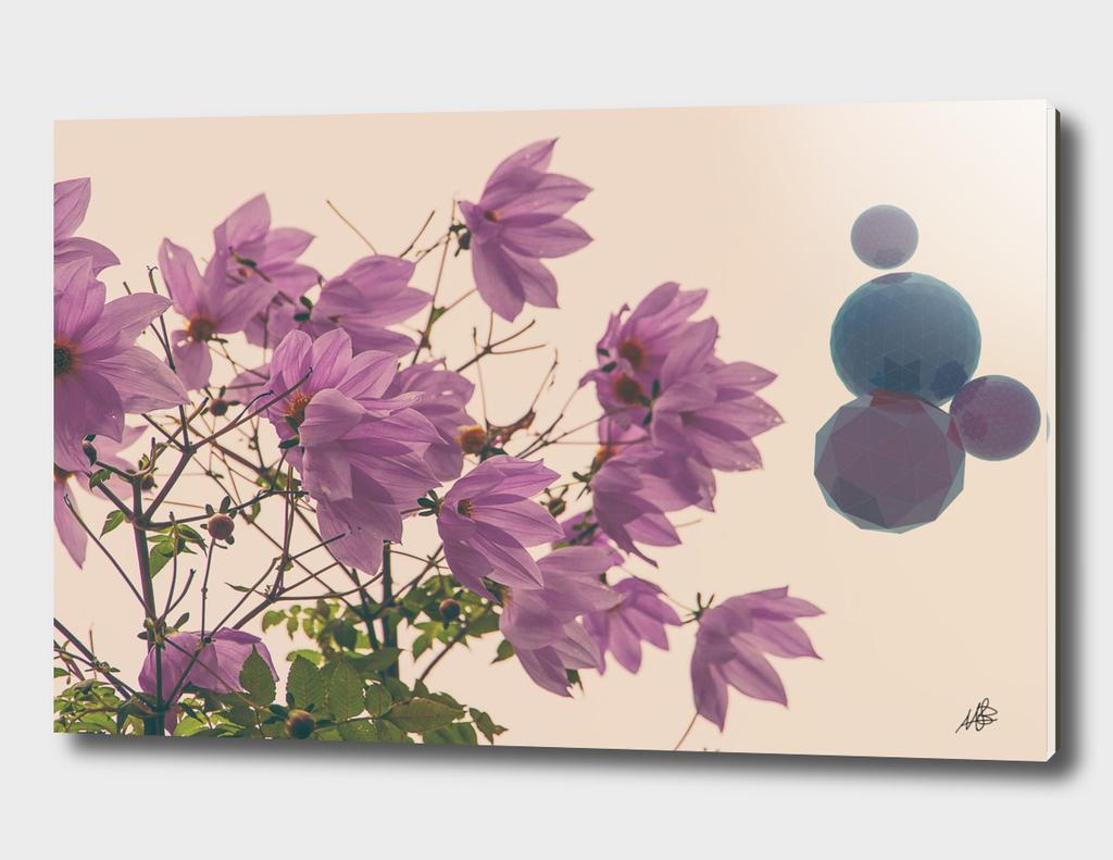 fiori&palle