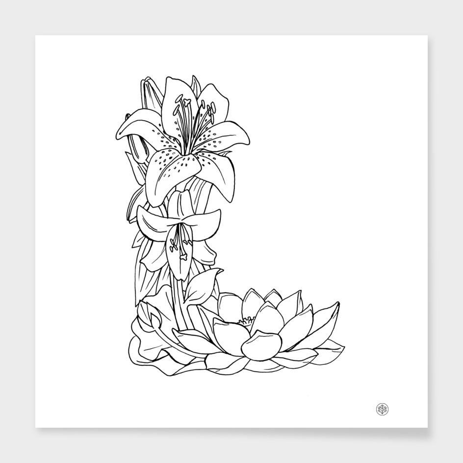 Lily & Lotus
