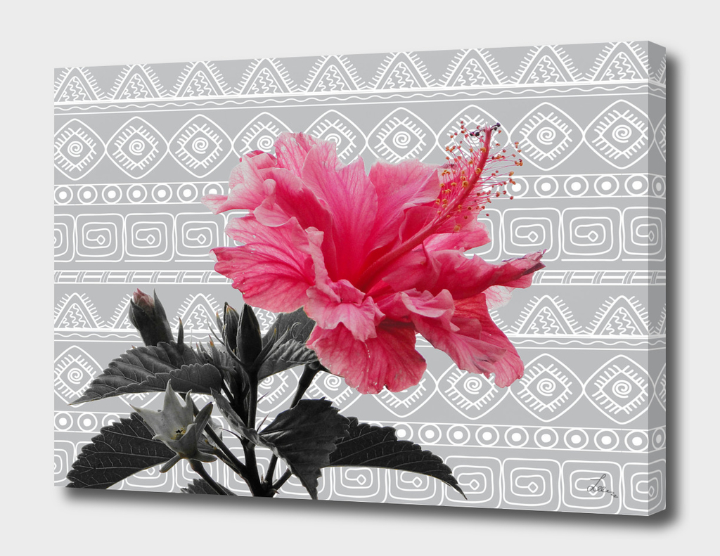 pink hibiscus on the grey