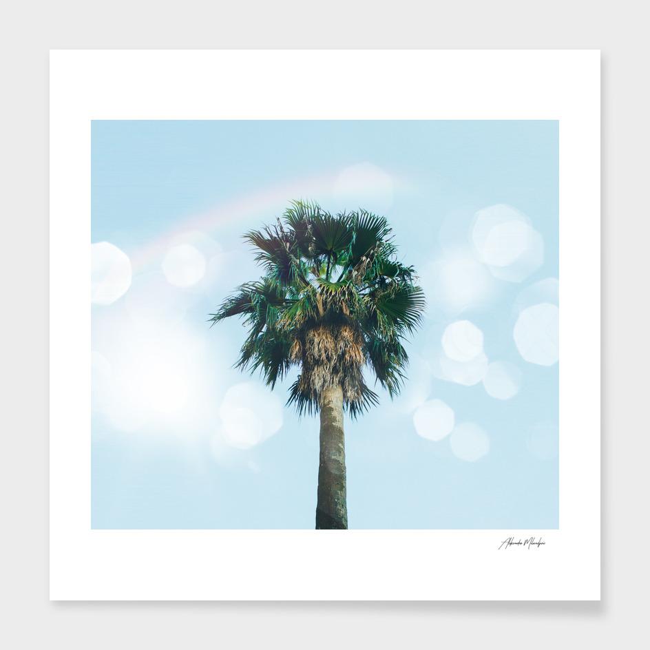 Bokeh Palm