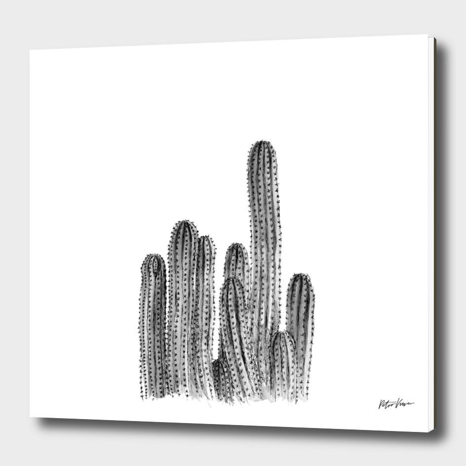 Tall Cacti