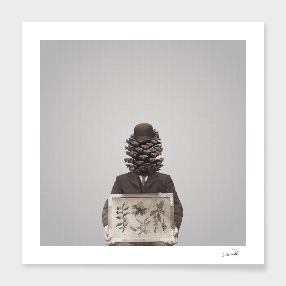 Pine Cone Mugshot
