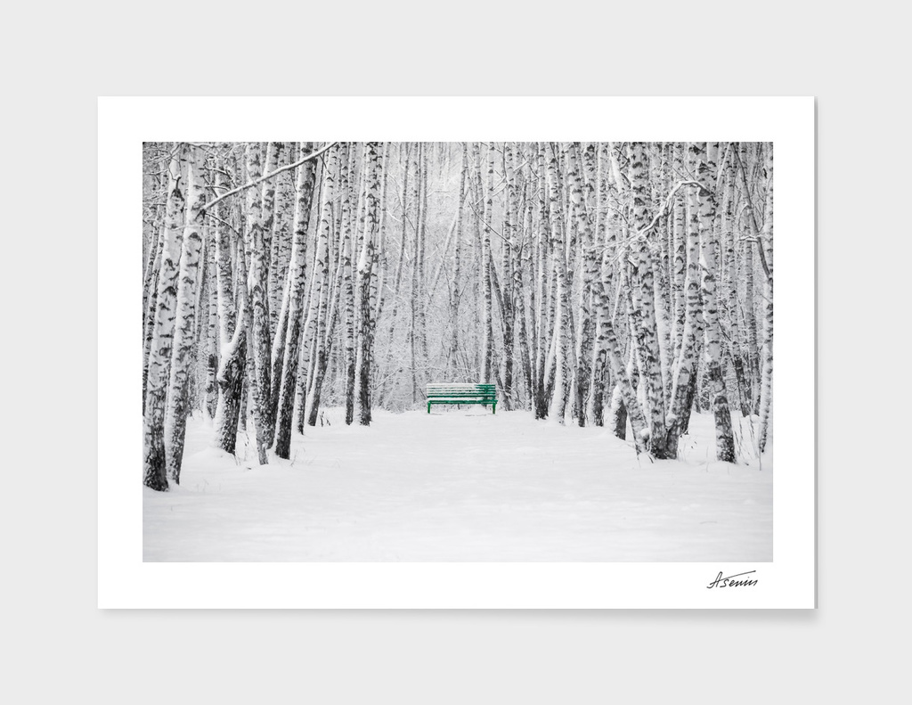 Green Bench In White Forest