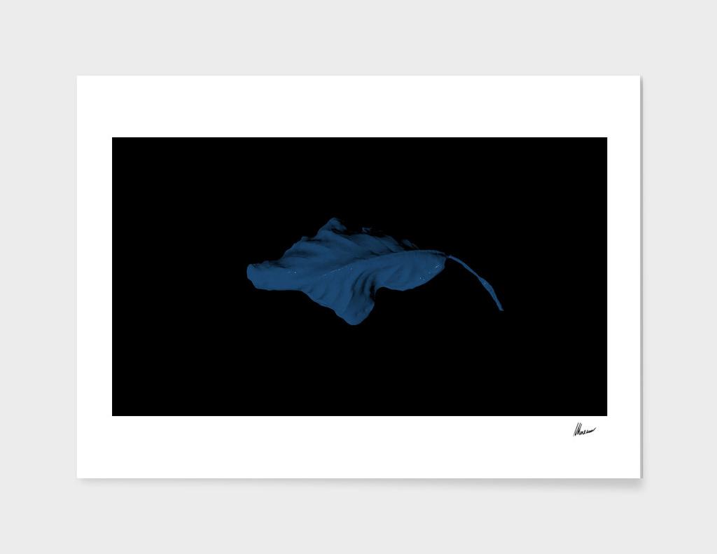 A Leaf. Blue.