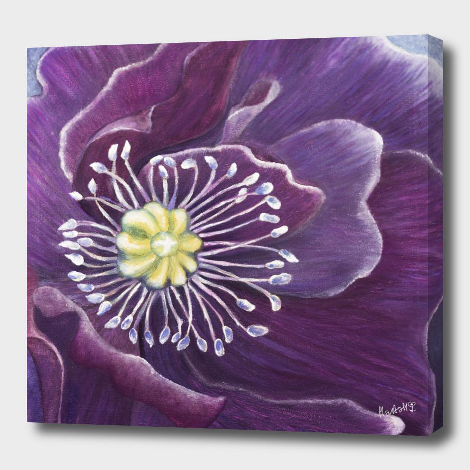 Purple Poppy in the Wind_Craftiespot