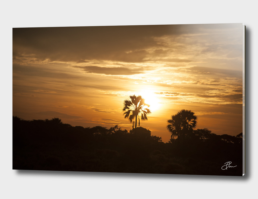 Golden_landscape_Botswana_02