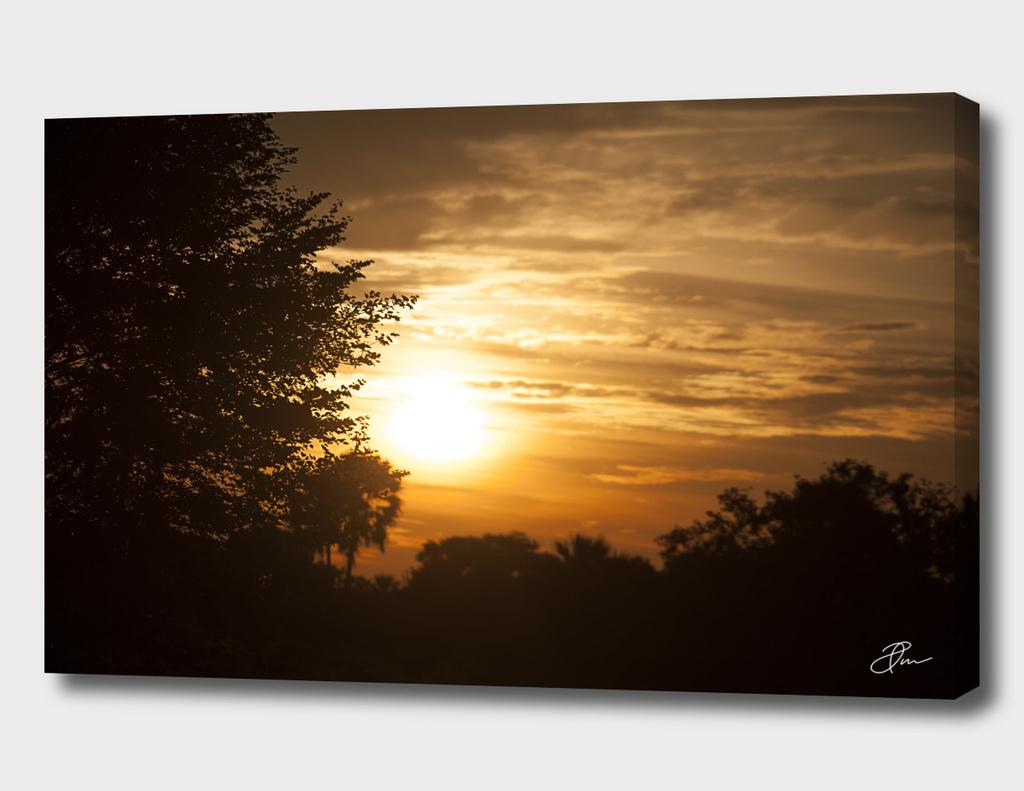 Golden_landscape_Botswana_01