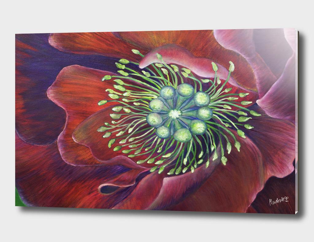 The Wild Poppy & The Crimson Sky_Craftiespot