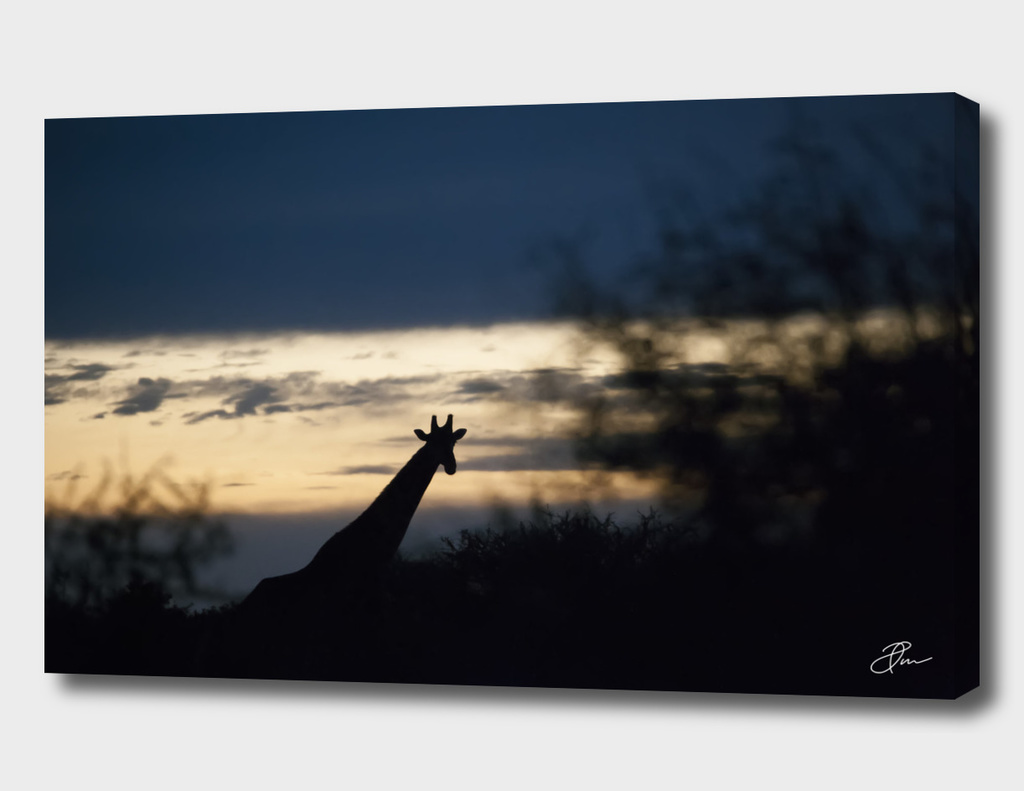 giraffe_silouhet
