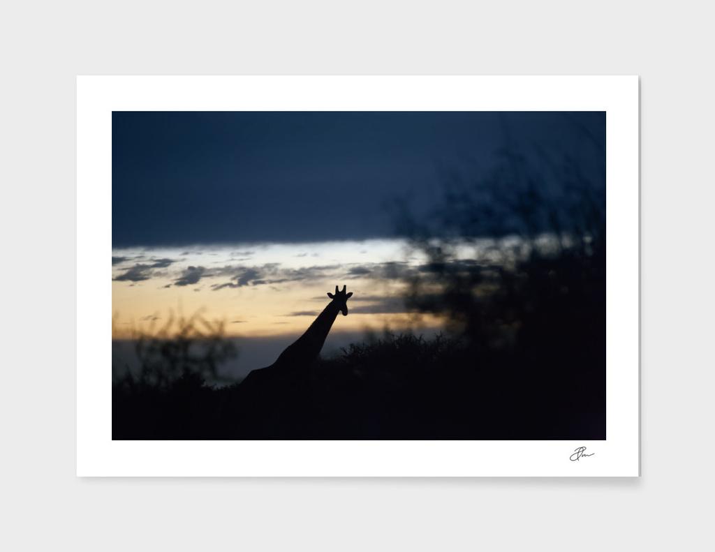 Giraffe_silhouette_02