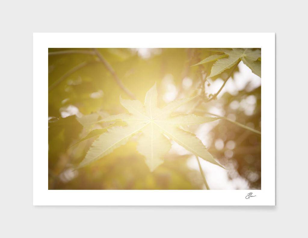 Green_Leaf_in_light
