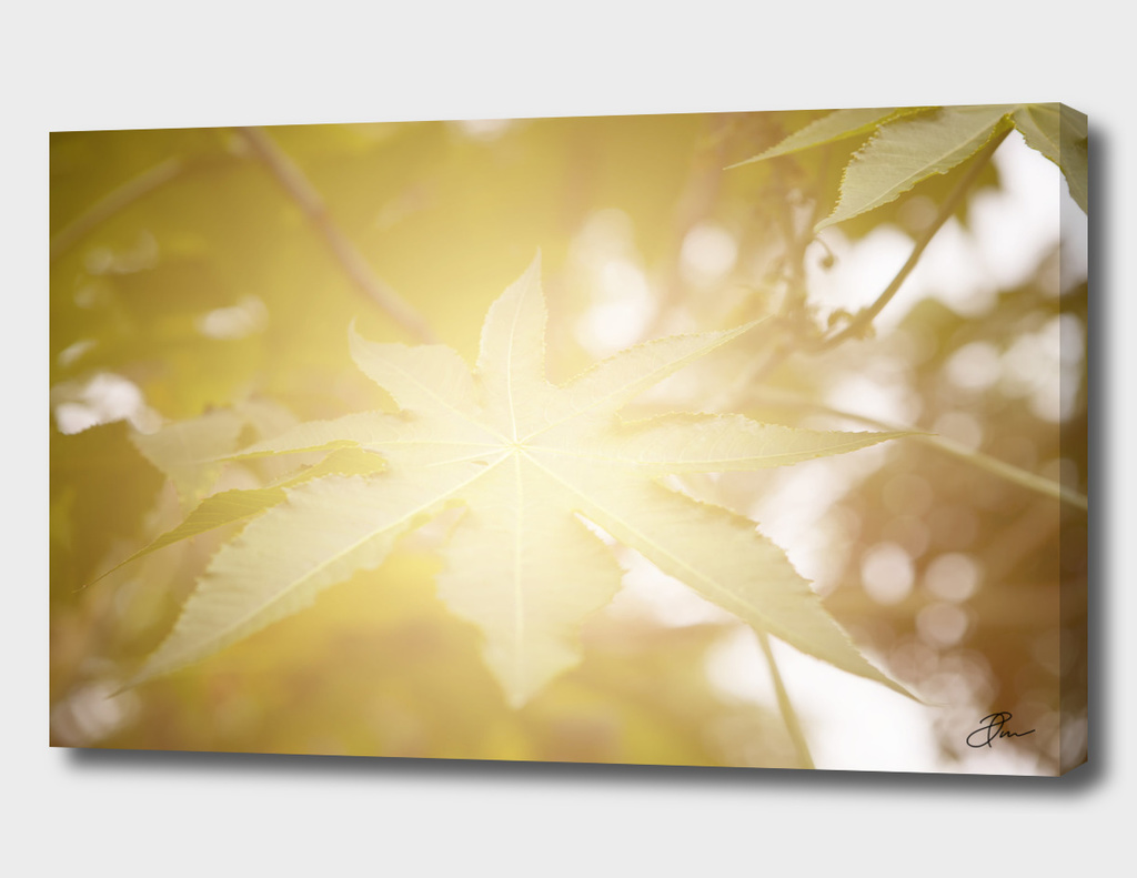 Green_Leaf_in_light