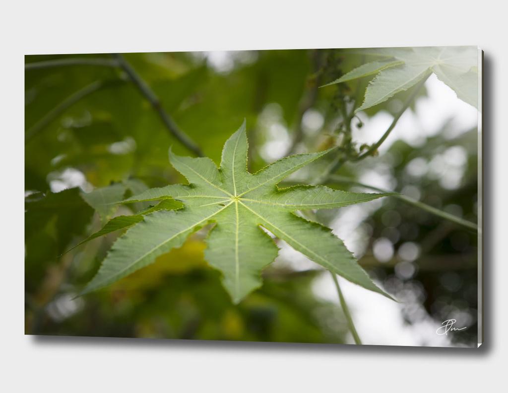 Green_Leaf