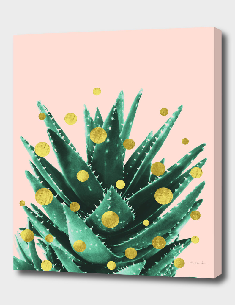Christmas Succulent