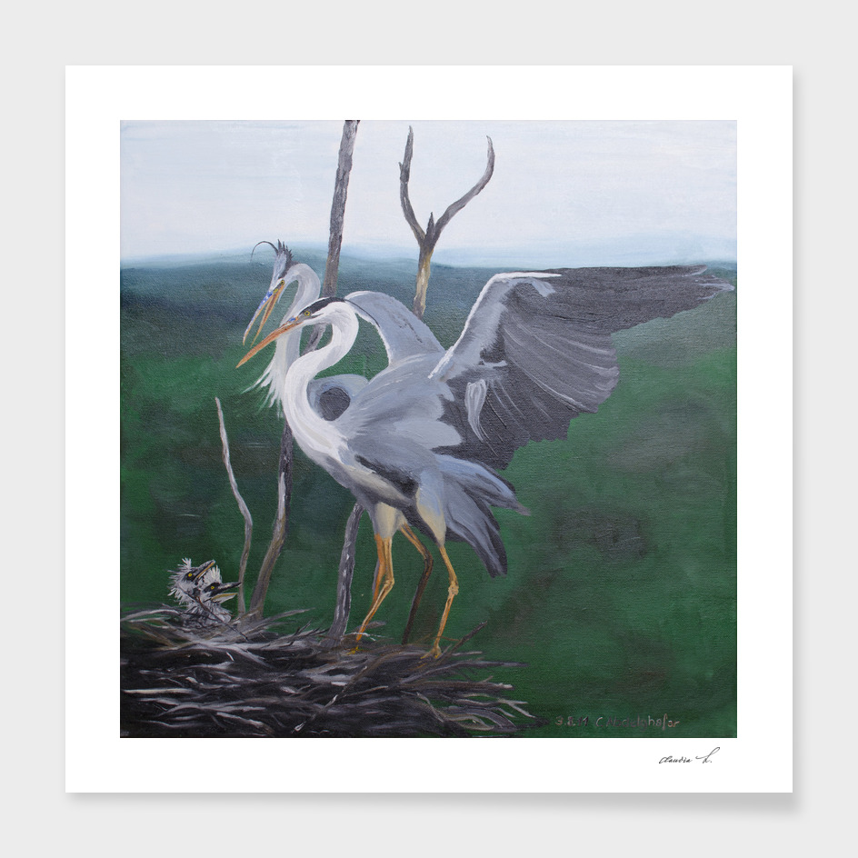 Grey herons family