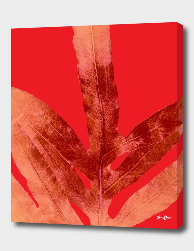 Ferns on Fire