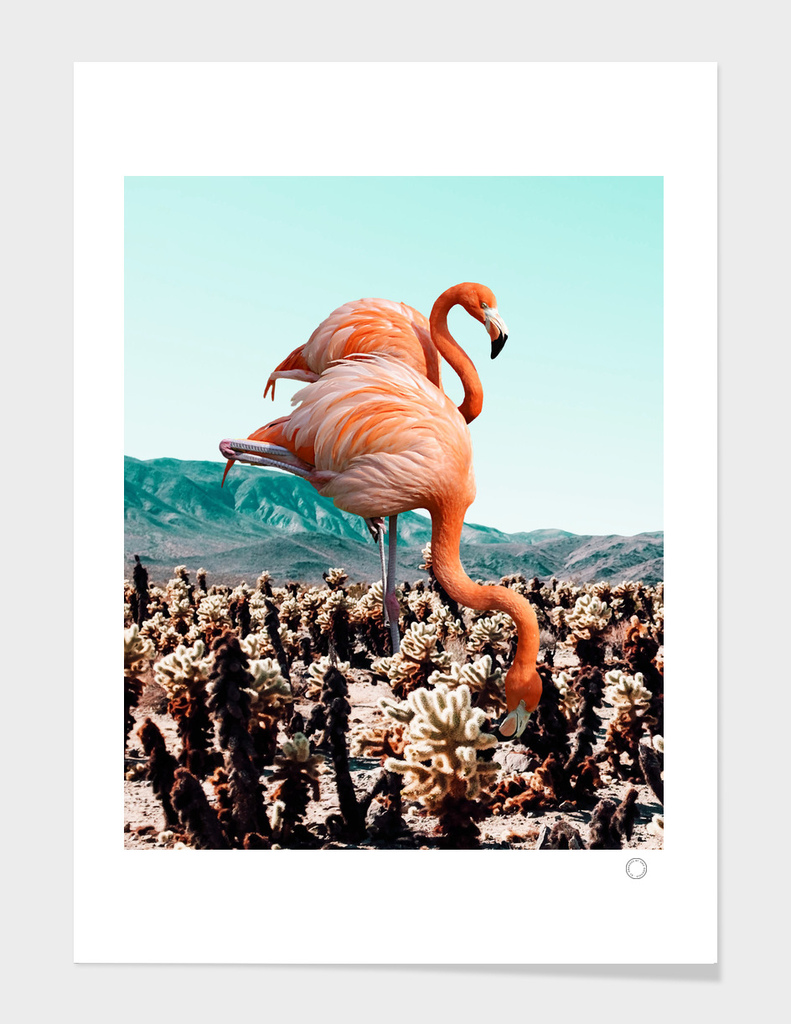 Flamingos In The Desert