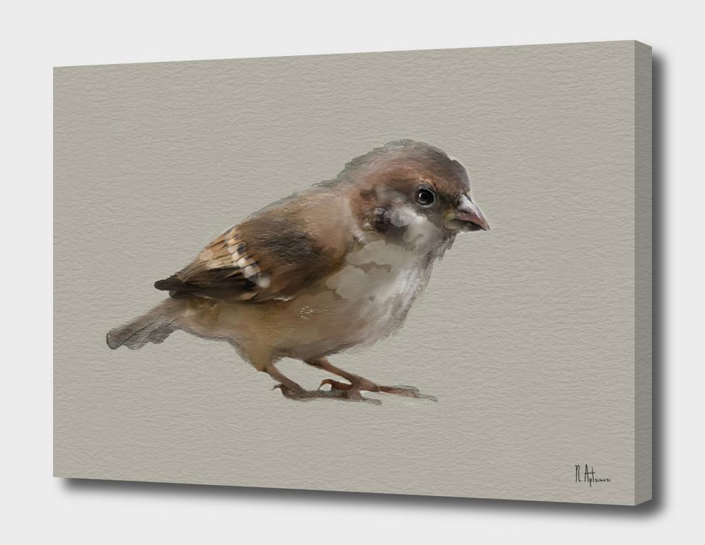 My Sparrow