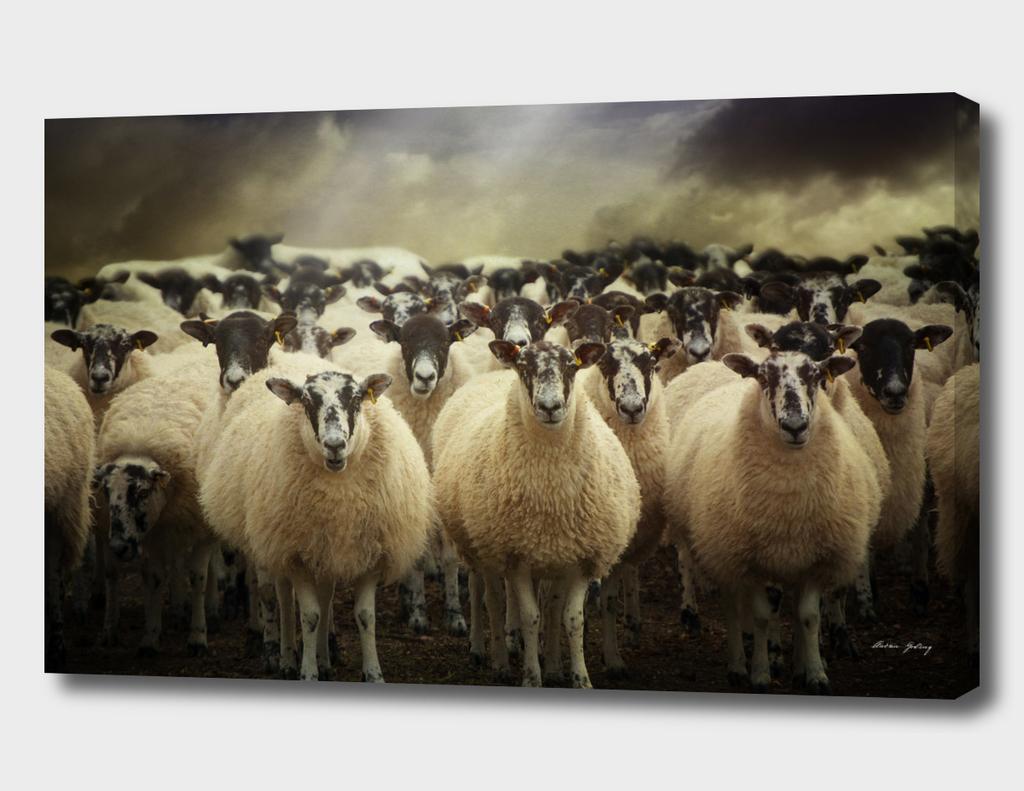 Sheepfest