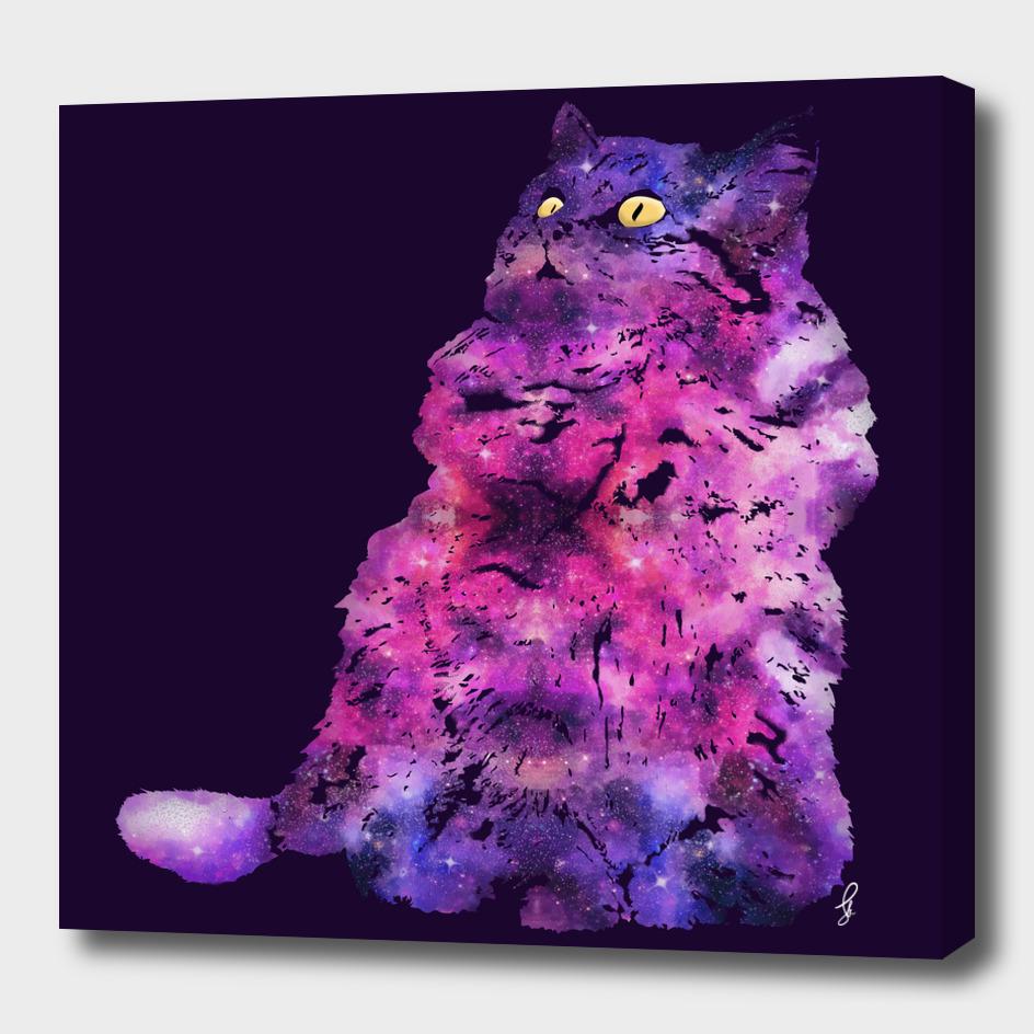 Cat Universe