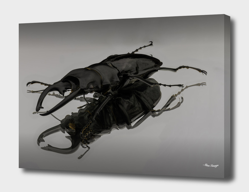 Stag Beetle on Glass
