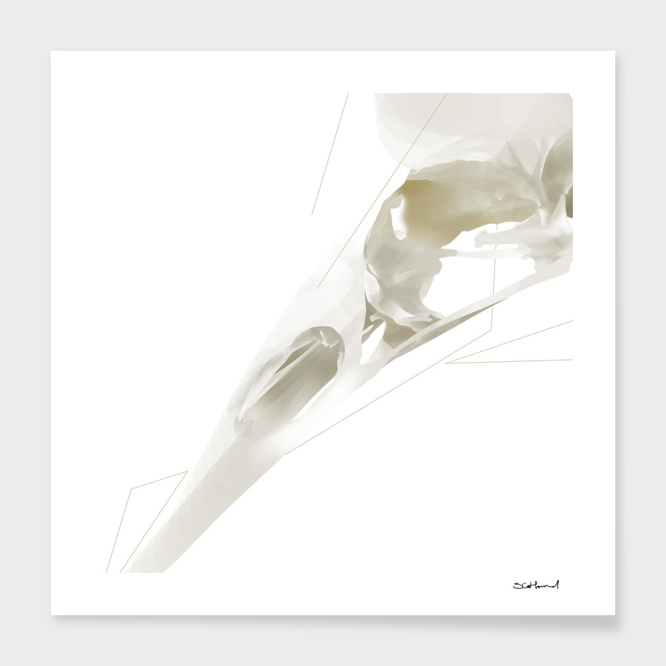 GEOMETRIC BIRD SKULL