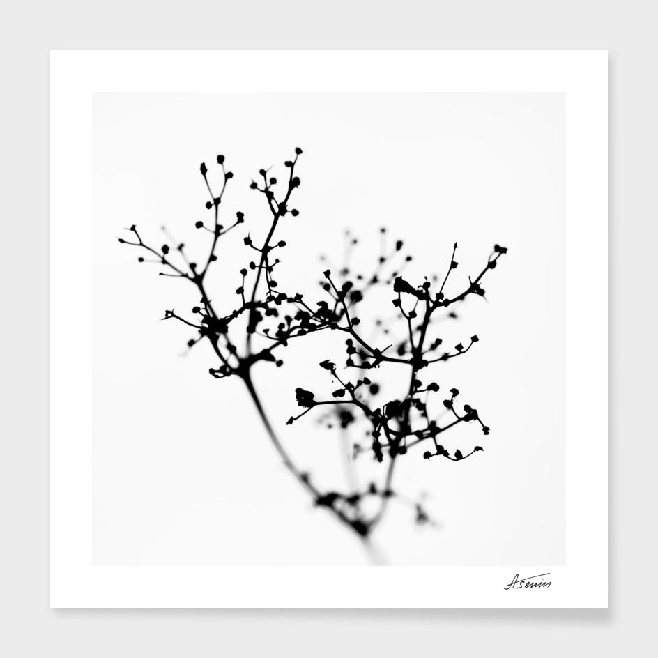 Floral Molecule