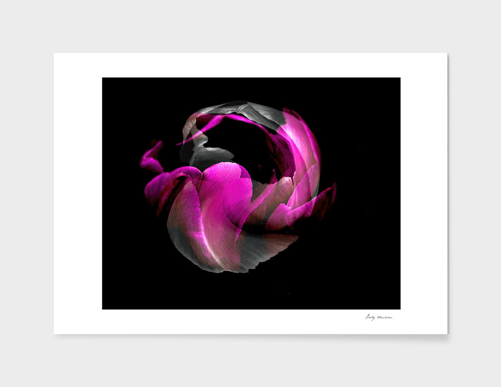 BLACK AND COLOUR FLOWER