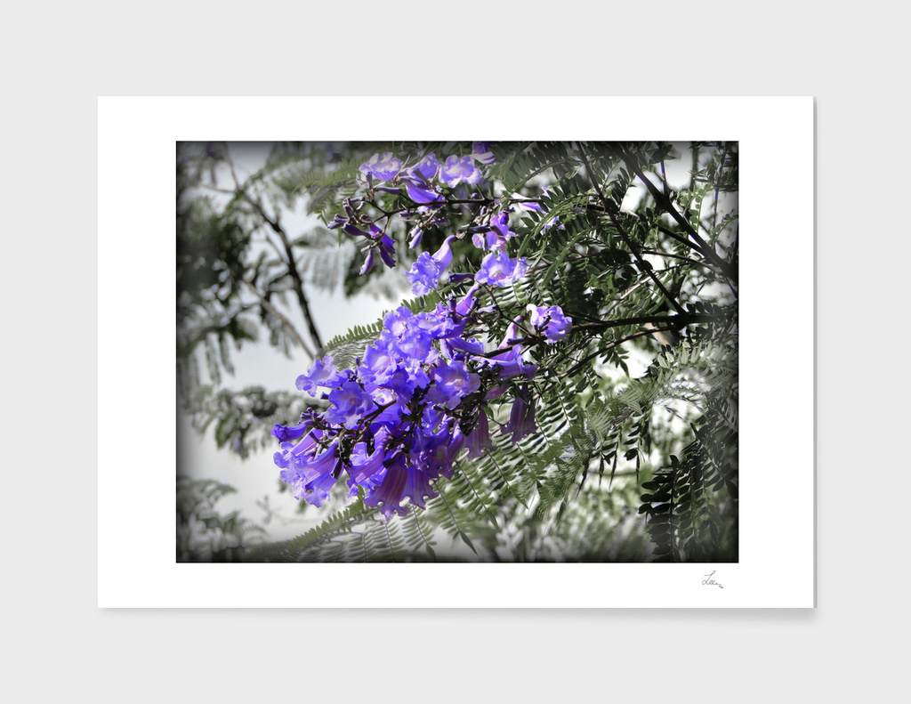 blue flowers of the tree
