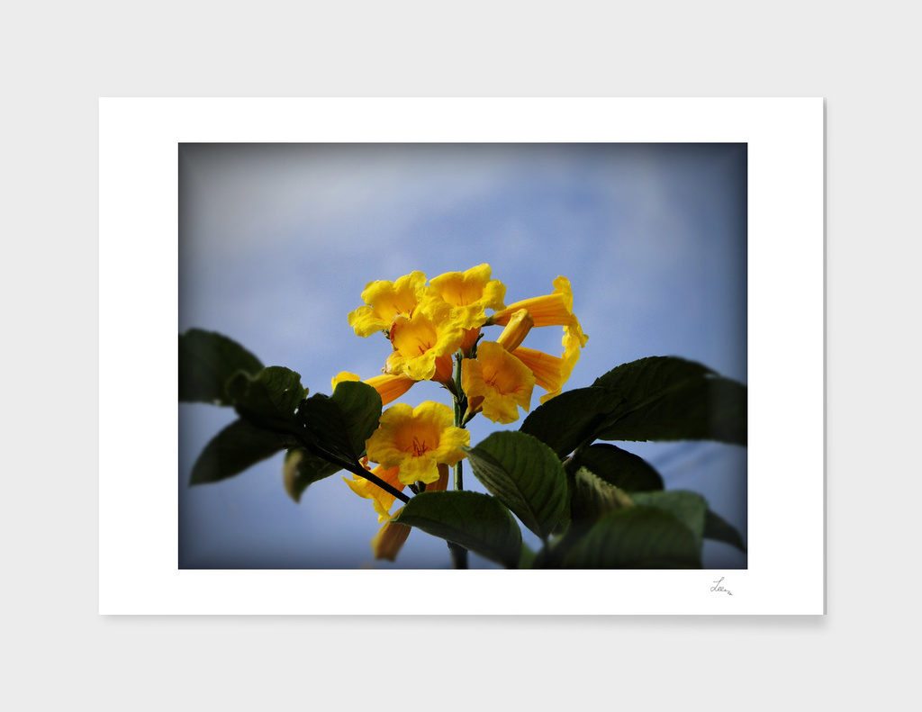 yellow flowers on a background of blue sky