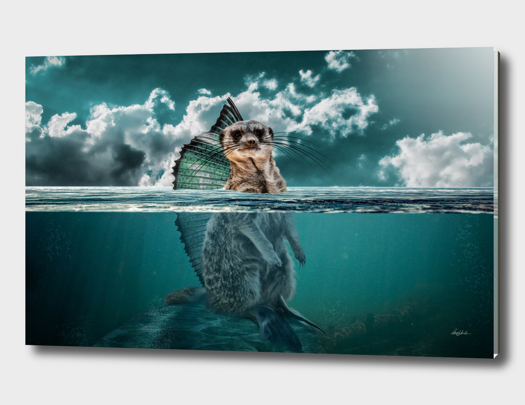 Meerkatfish