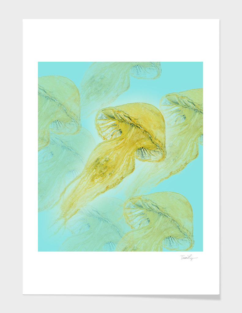 Jelly Fish 1