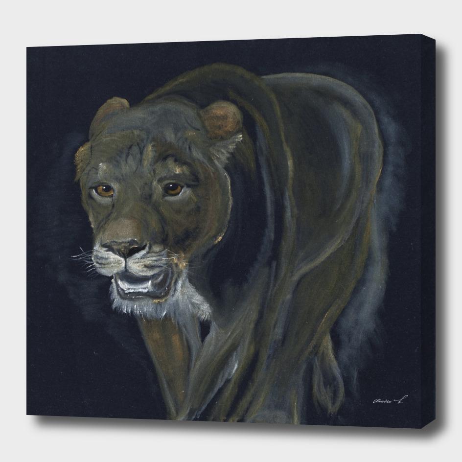 Lion female walking