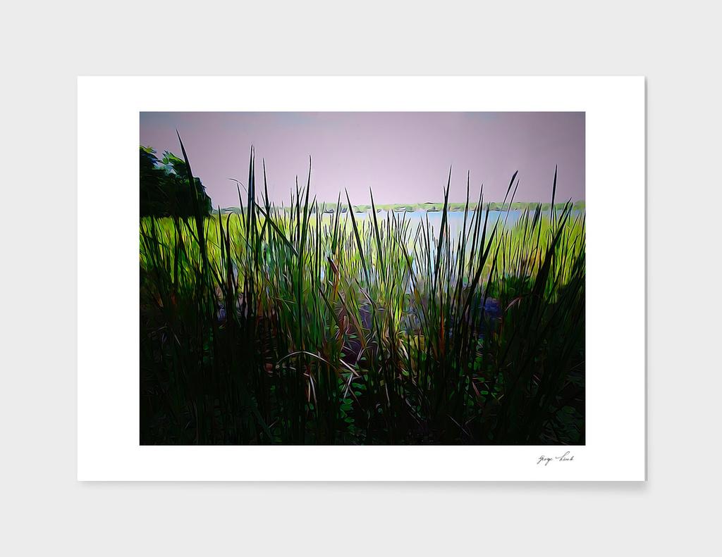 Lake Tarpon Early Light