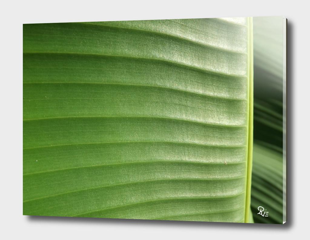 Bananis 3