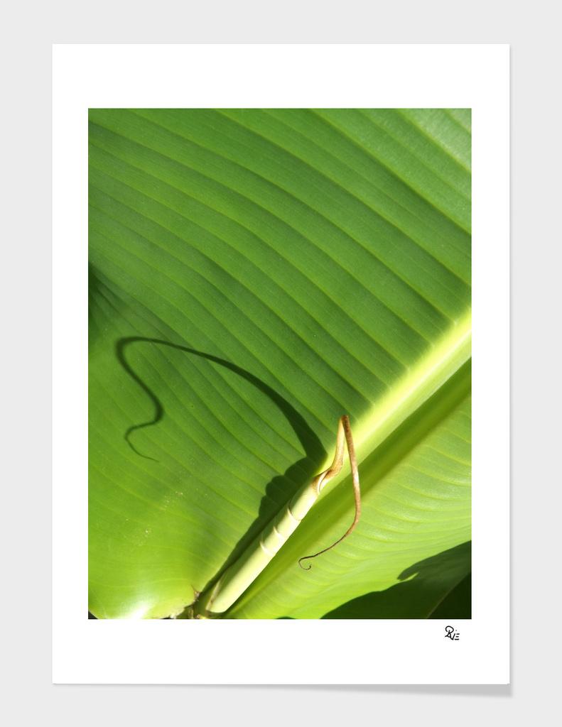 Bananis 2