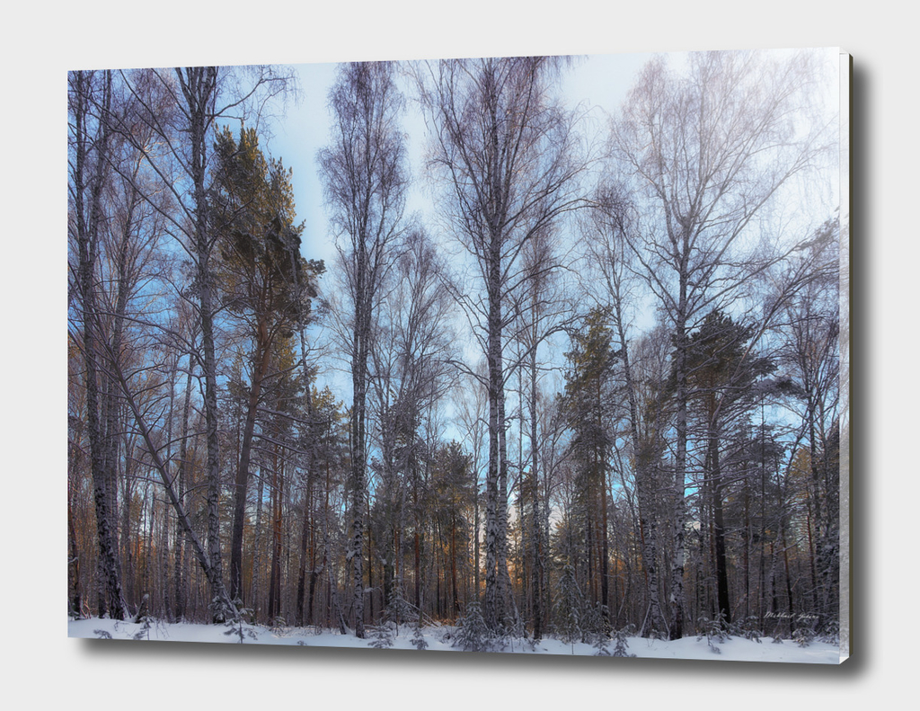 The sunlight in the winter forest