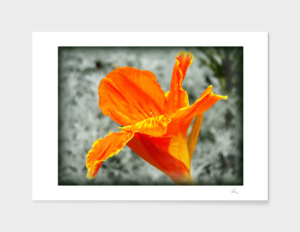 orange on the grey