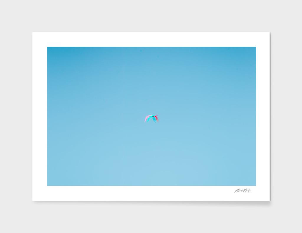 3D Seagull