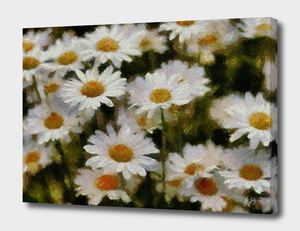 MONET-CALIA C1 N1 - DAISIES FOR ANNE