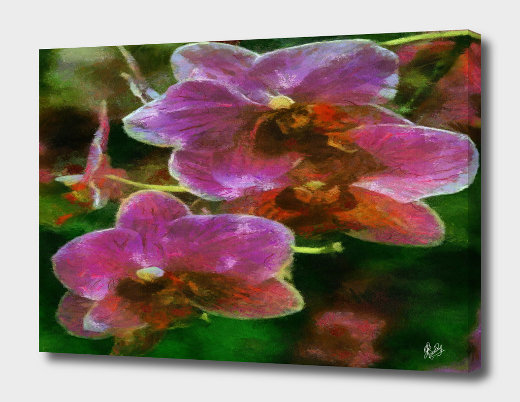 MONET- CALIA C1N2 - ORCHIDS FOR ANNE