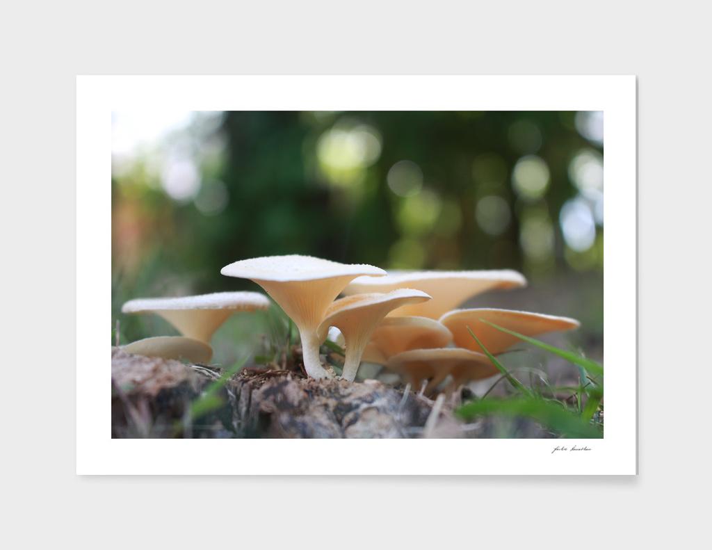 A Family of Mushroom