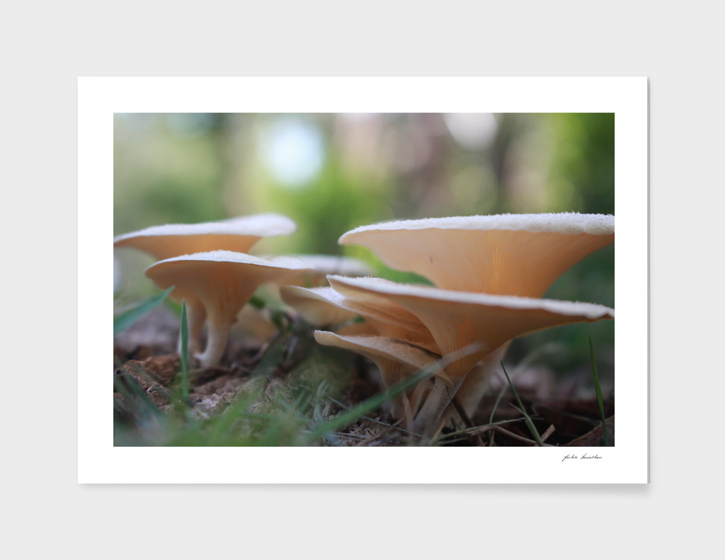 Great White Toadstool