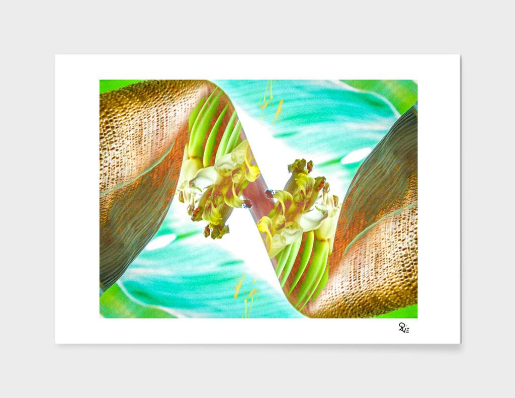 Bananis 24