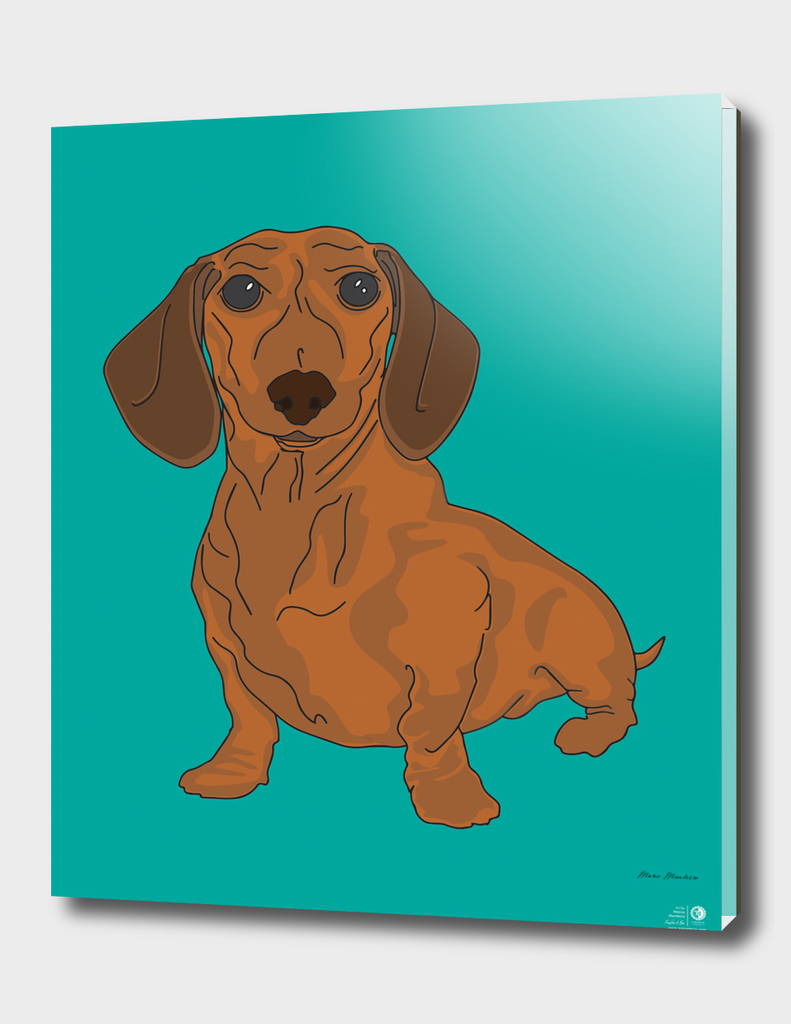 Dachshund - Dogs Series