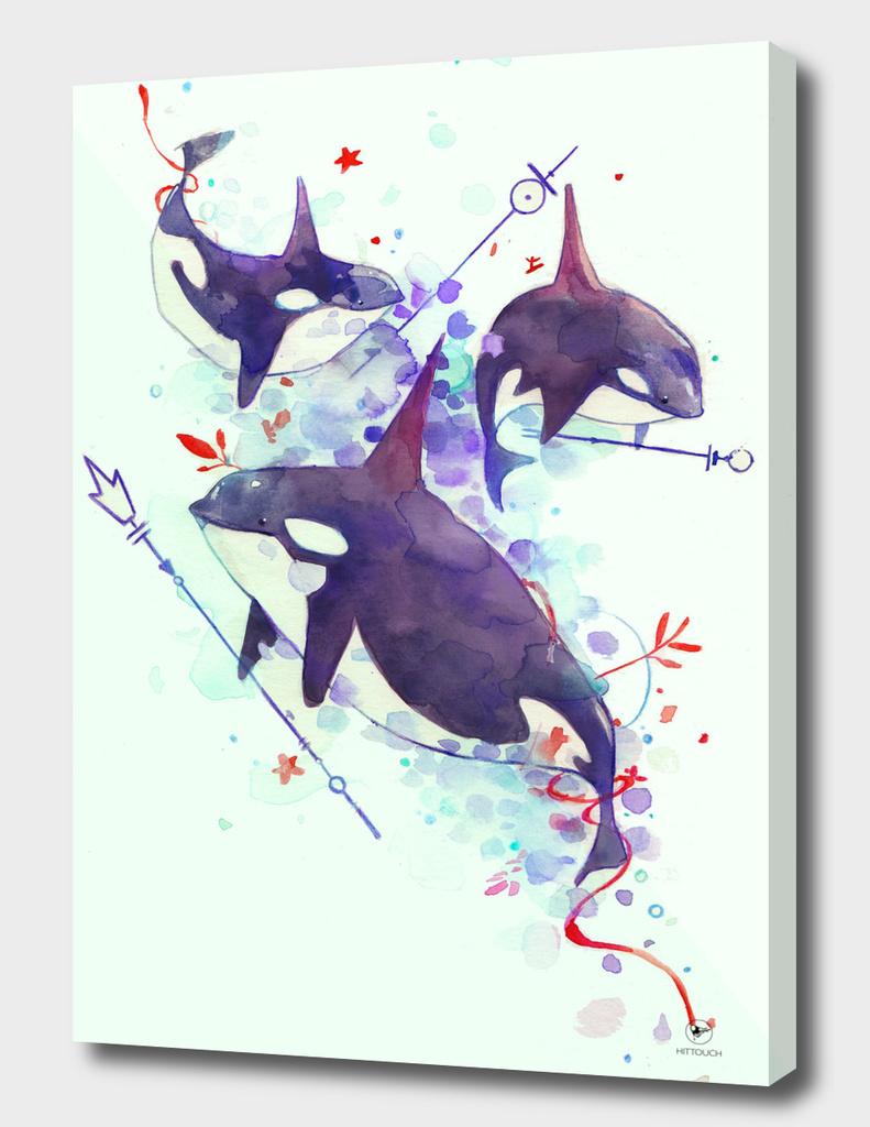 whales_animalia