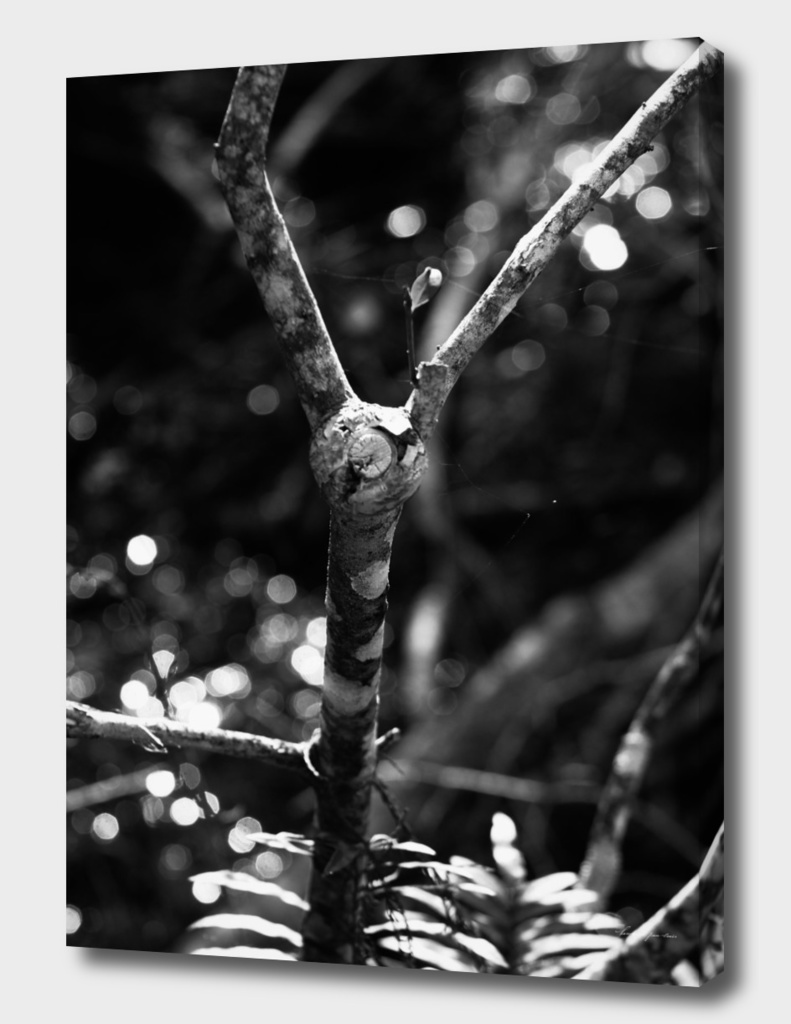 Black & White Tree Branch